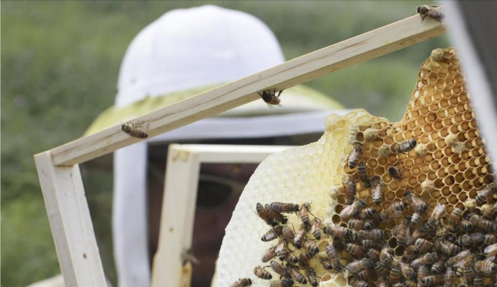 新西兰计划在中国市场垄断麦卢卡蜂蜜!