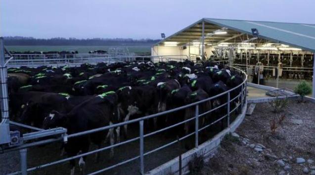 澳洲证交所(ASX)上市的Keytone Dairy奶粉公司获沃尔玛首单对华出口奶粉