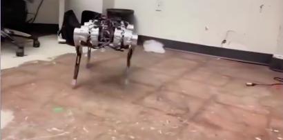 澳大利亚测试军用机器狗,专家谈其两面性:高效却有道德风险