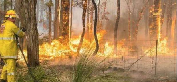 悉尼登顶全球最热城市:烈焰飞腾又有炎炎夏日,高温逼近50度