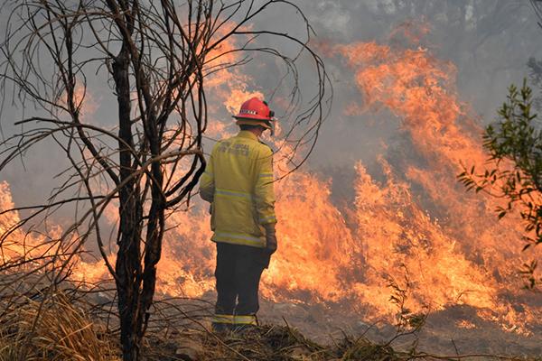 林火导致澳大利亚酒店入住率锐减