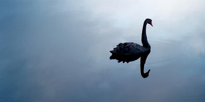 新冠病毒早被预言?黑天鹅或扼杀牛市