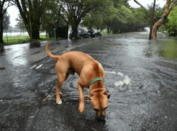 【实时更新 视频】20年最强暴雨来袭!悉尼铁路网瘫痪 线路停驶 学校停课 1.6万人急救求助