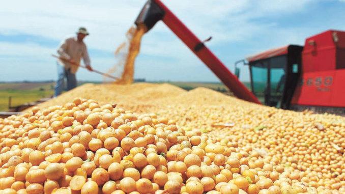 中国6月进口大豆数量创新高