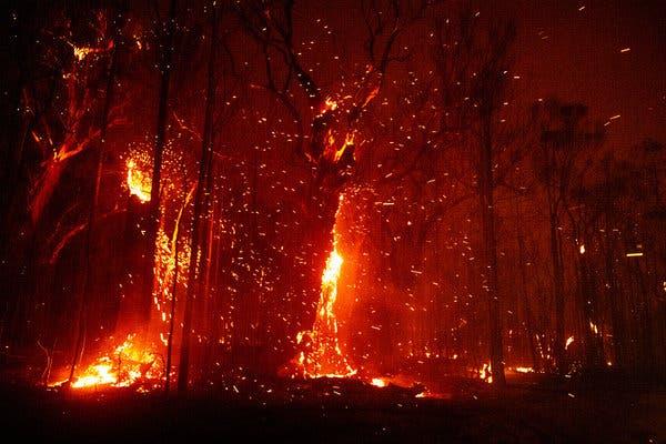 还有谁记得澳洲山林大火?30亿动物亡灵依然未散!