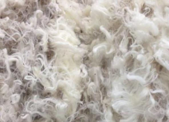 中国贸易战要偃旗息鼓了?对澳羊毛进口配额增加5%