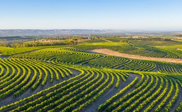随着假日季节订单的激增,Digital Wine Ventures在McLaren Vale葡萄酒产区占据主导地位