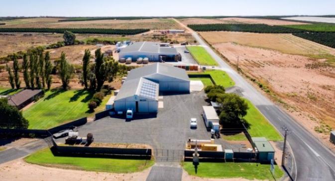 南澳一柑橘农场出售