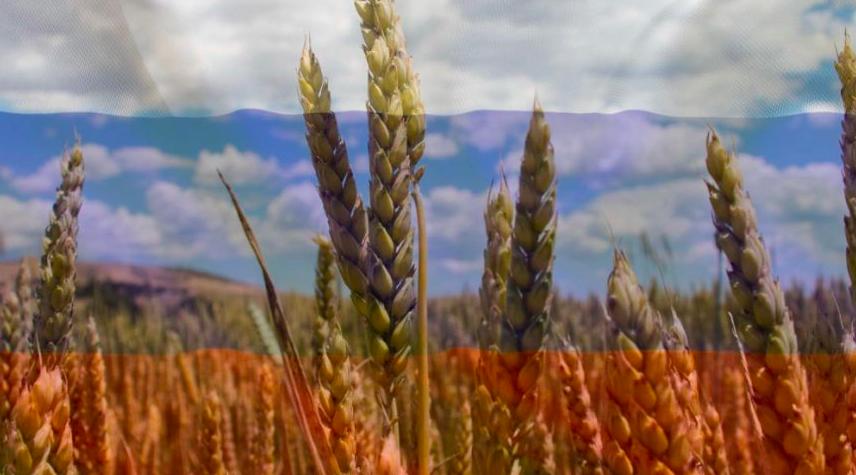 俄国小麦出口税将利好澳洲农民