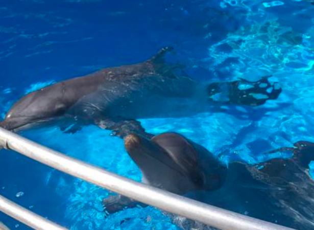 新州人再也看不到海豚表演了!新法通过禁止商业性圈养