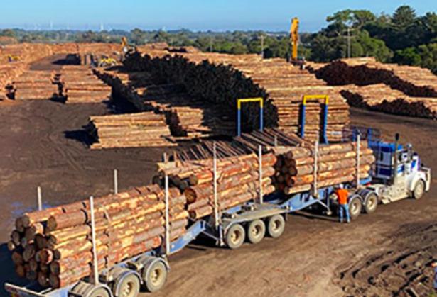 澳大利亚请求恢复木材出口,但中国没搭理