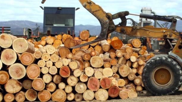 澳中战火下炮灰:维州木材企业债压破产!