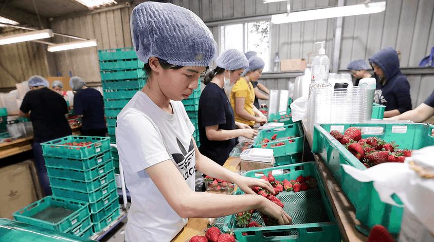 年底前,新的农业签证将提供给10个东盟国家