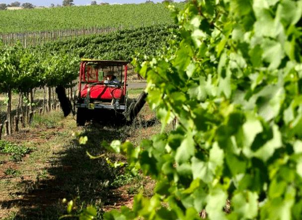 暴增73.3%! 澳洲农作物年出口额增至史上第二高